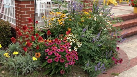 Ladonna's Garden 1