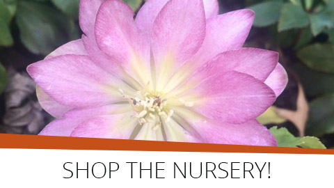 Shop the Nursery